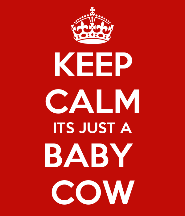 KEEP CALM ITS JUST A BABY  COW