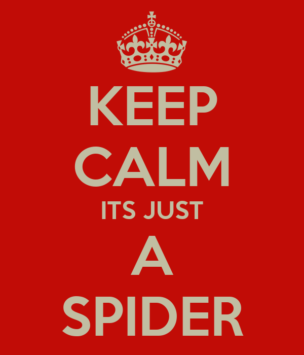 KEEP CALM ITS JUST A SPIDER