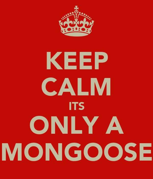 KEEP CALM ITS ONLY A MONGOOSE