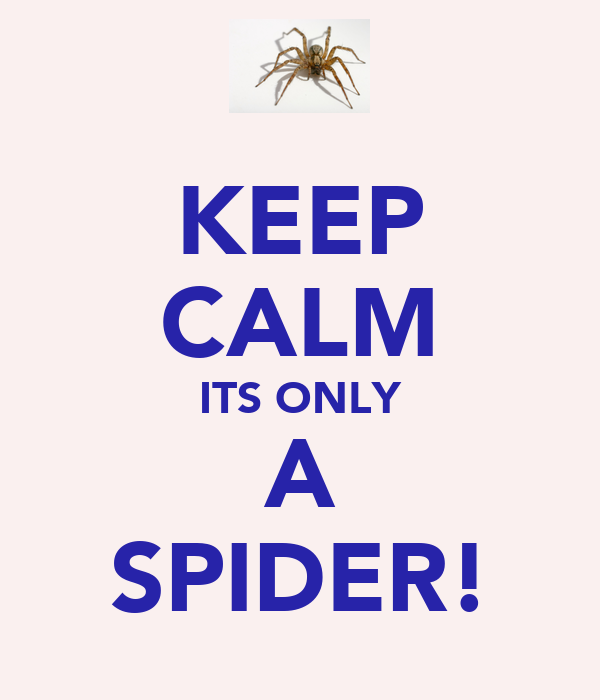 KEEP CALM ITS ONLY A SPIDER!