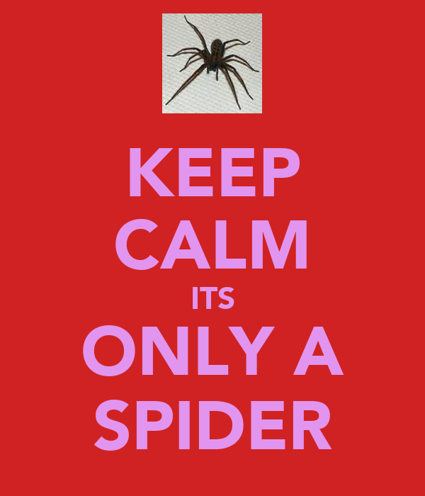 KEEP CALM ITS ONLY A SPIDER