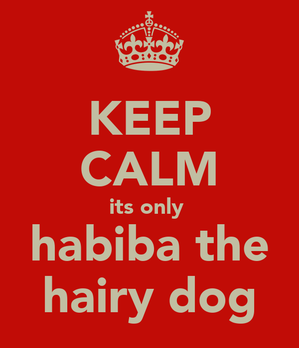 KEEP CALM its only  habiba the hairy dog