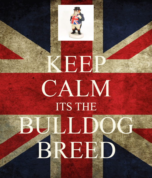 KEEP CALM ITS THE BULLDOG BREED