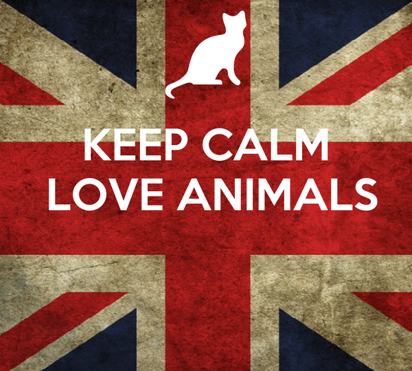 KEEP CALM  LOVE ANIMALS