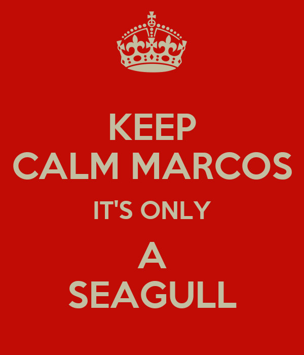KEEP CALM MARCOS IT'S ONLY A SEAGULL