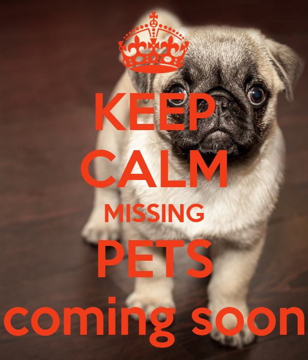 KEEP CALM MISSING PETS coming soon