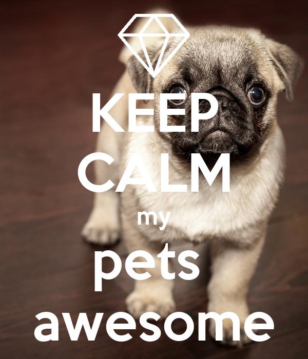KEEP CALM my pets  awesome