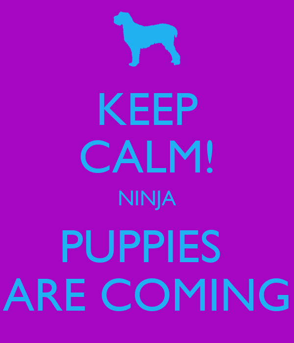 KEEP CALM! NINJA PUPPIES  ARE COMING