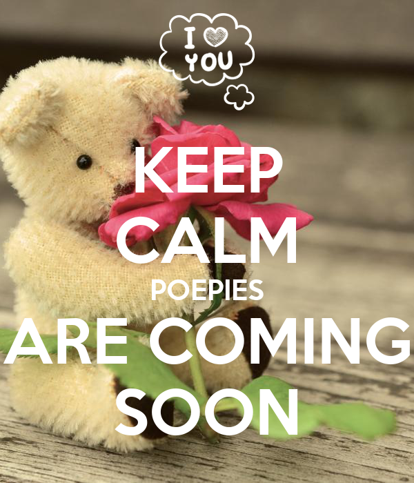 KEEP CALM POEPIES ARE COMING SOON