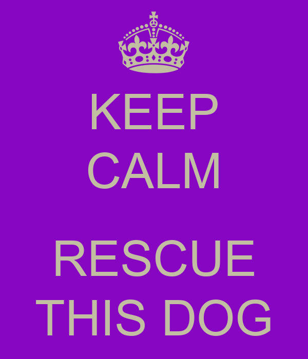 KEEP CALM  RESCUE THIS DOG