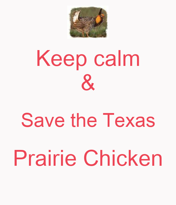 Keep calm & Save the Texas Prairie Chicken