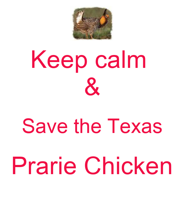 Keep calm  & Save the Texas Prarie Chicken