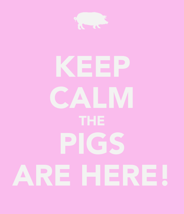 KEEP CALM THE PIGS ARE HERE!