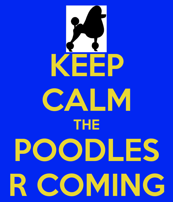 KEEP CALM THE POODLES R COMING