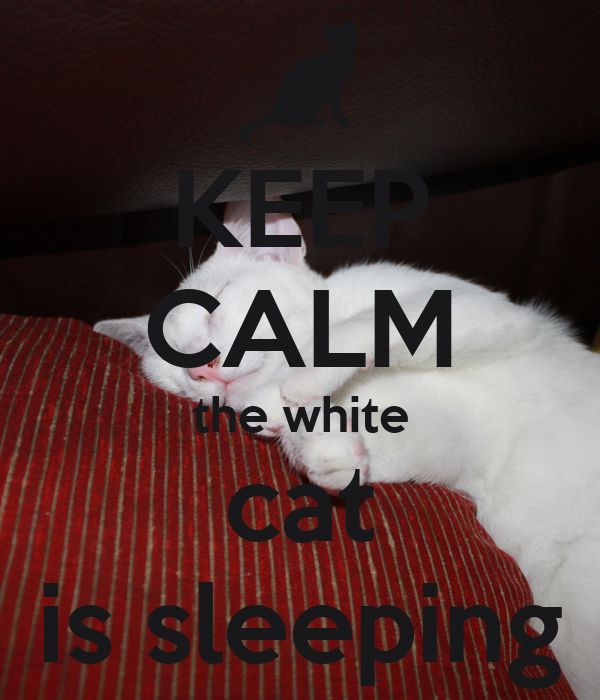 KEEP CALM the white cat is sleeping