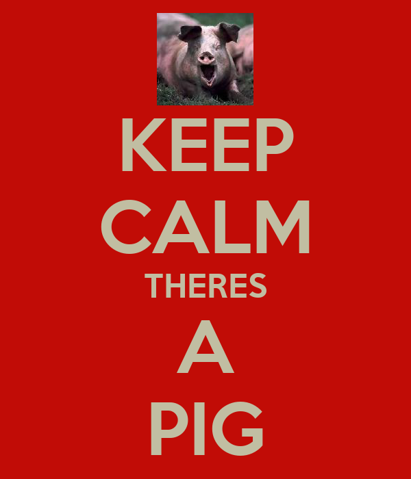 KEEP CALM THERES A PIG
