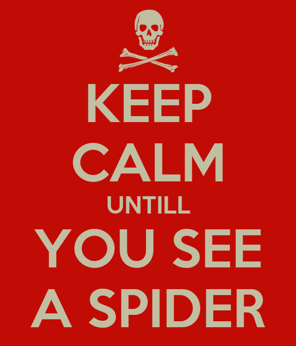 KEEP CALM UNTILL YOU SEE A SPIDER