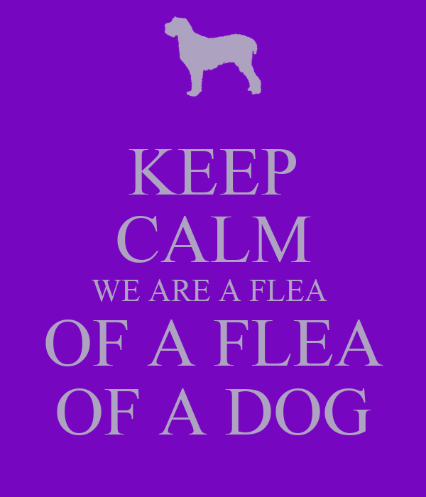 KEEP CALM WE ARE A FLEA  OF A FLEA OF A DOG