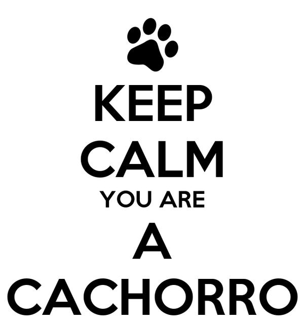 KEEP CALM YOU ARE A CACHORRO