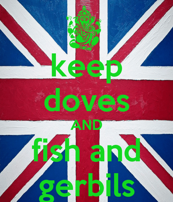 keep doves AND fish and gerbils