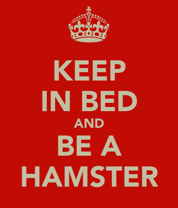 KEEP IN BED AND BE A HAMSTER