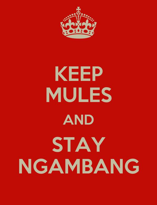 KEEP MULES AND STAY NGAMBANG