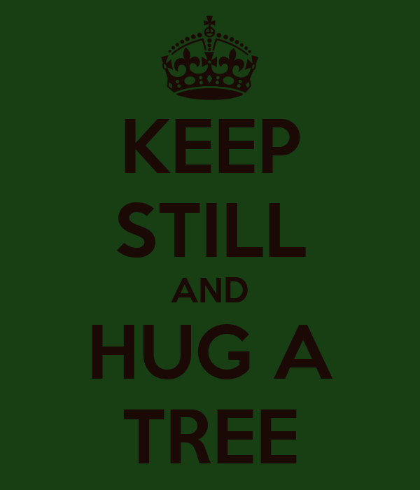 KEEP STILL AND HUG A TREE