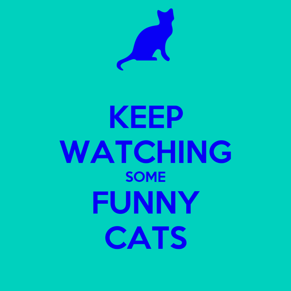 KEEP WATCHING SOME FUNNY CATS