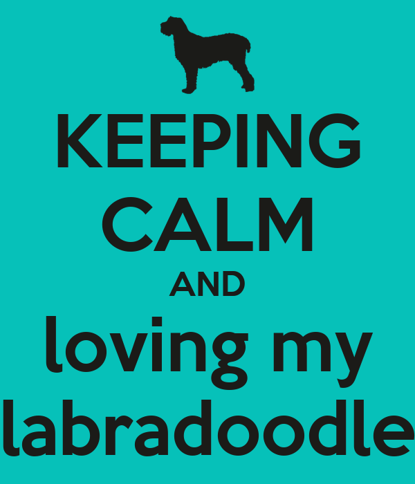 KEEPING CALM AND loving my labradoodle