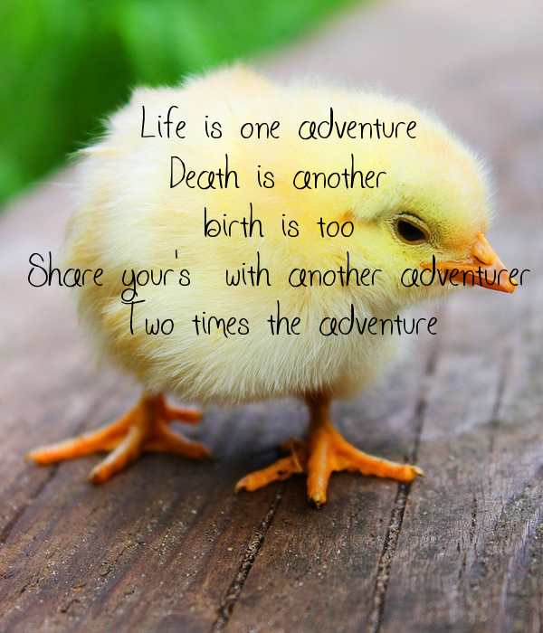 Life is one adventure