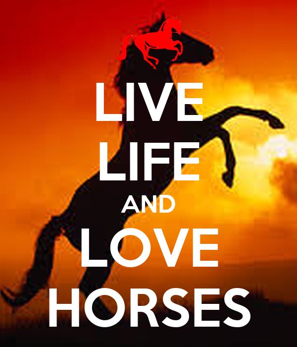 LIVE LIFE AND LOVE HORSES