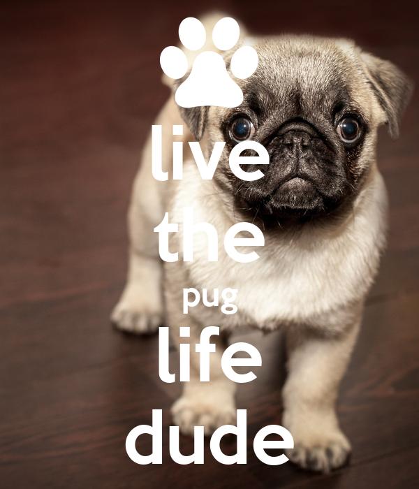 live the pug life dude