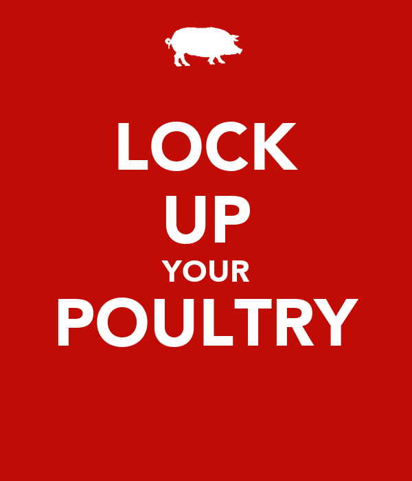 LOCK UP YOUR POULTRY