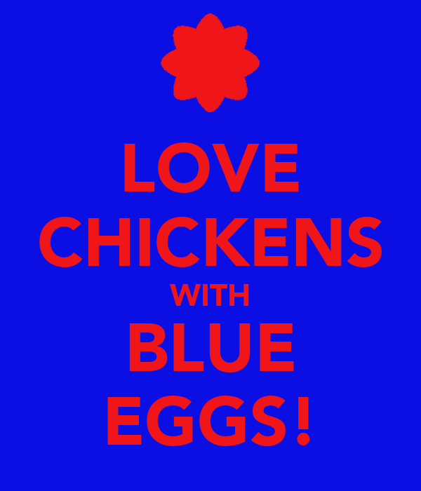 LOVE CHICKENS WITH BLUE EGGS!