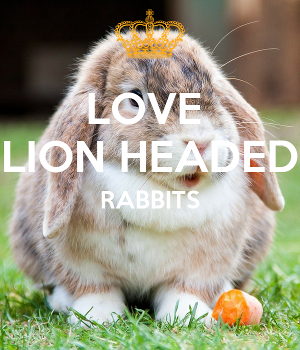 LOVE  LION HEADED RABBITS