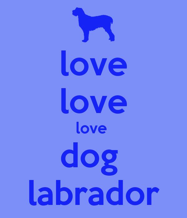 love love love  dog  labrador