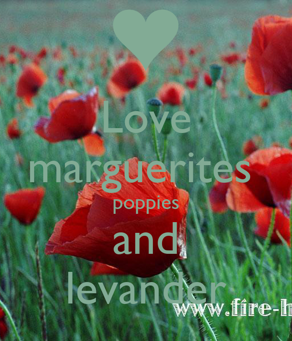 Love marguerites  poppies and levander