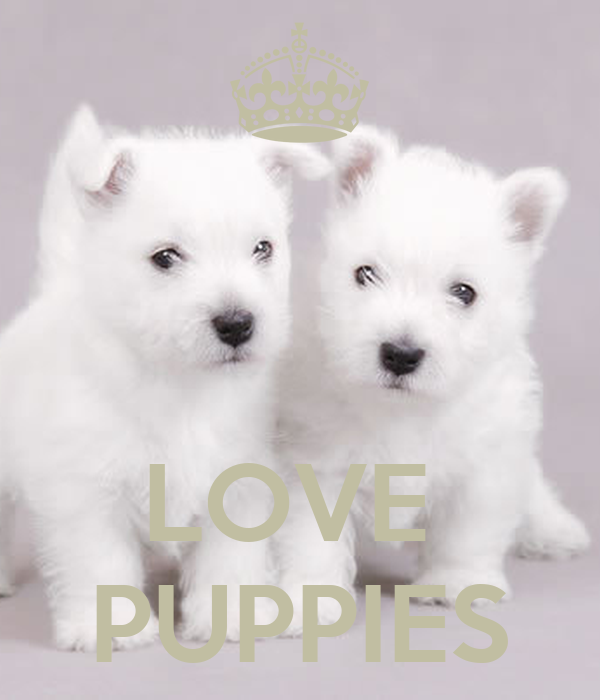 LOVE  PUPPIES