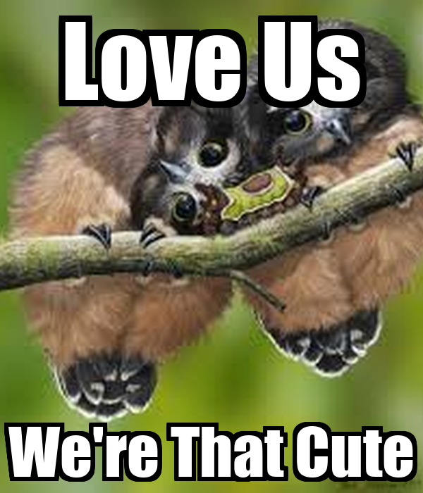 Love Us We're That Cute