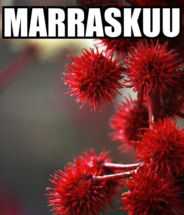 MARRASKUU