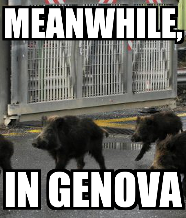 MEANWHILE, IN GENOVA