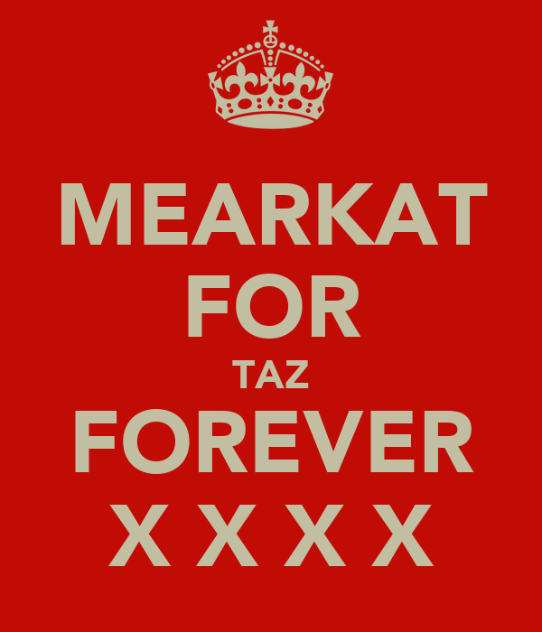 MEARKAT FOR TAZ FOREVER X X X X