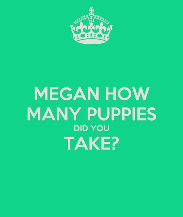 MEGAN HOW MANY PUPPIES DID YOU TAKE?