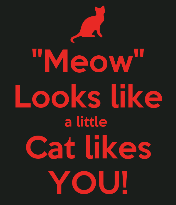 """Meow"" Looks like a little  Cat likes YOU!"