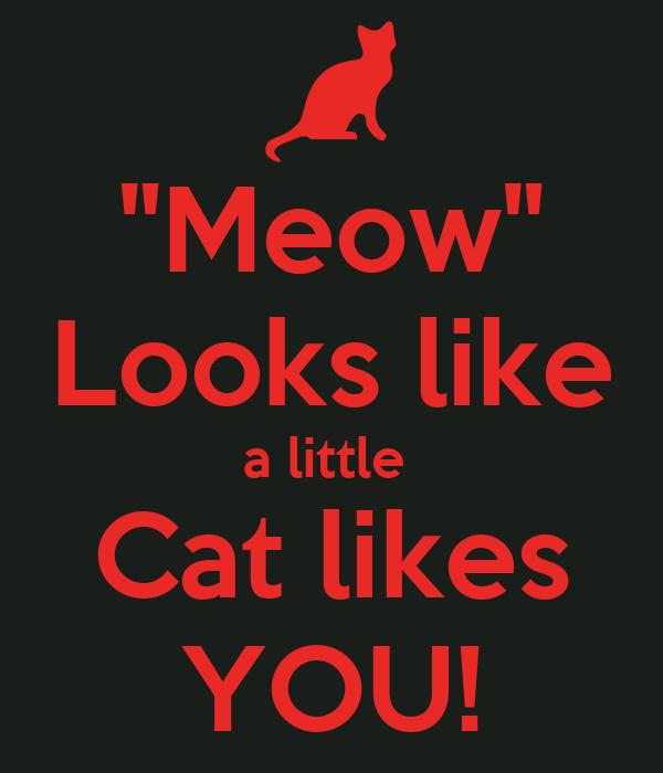 """Meow"" Looks like a little  Cat likes YOU!"