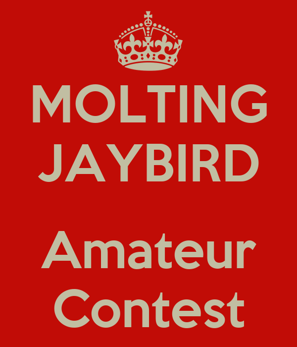 MOLTING JAYBIRD  Amateur Contest