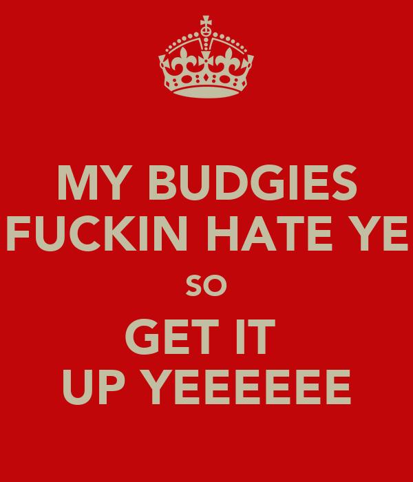 MY BUDGIES FUCKIN HATE YE SO GET IT  UP YEEEEEE