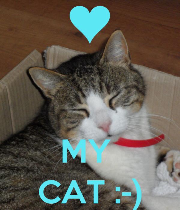 MY  CAT :-)