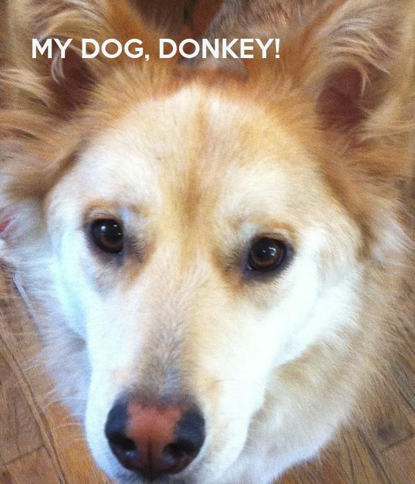 MY DOG, DONKEY!