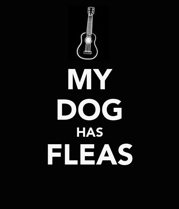 MY DOG HAS FLEAS